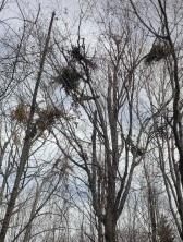Even Bears Build Nests
