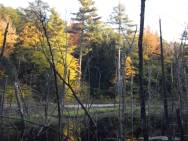 New Hampshire and Vermont Timber Harvesting