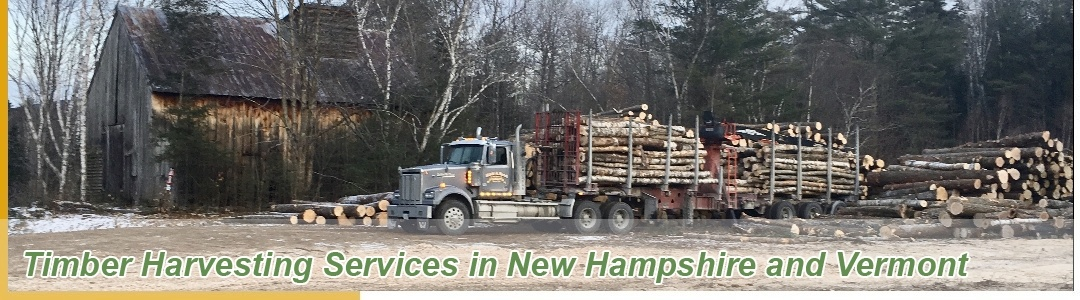 Timber Harvesting Services