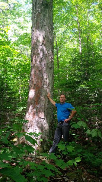 About New Hampshire & Vermont Forestry