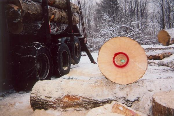 New Hampshire forestry and Vermont forestry