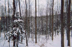 Bridgewater Forestry