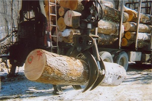 Barre Forestry
