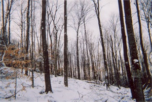 St. Johnsbury Forestry