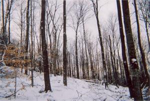 Strafford Forestry
