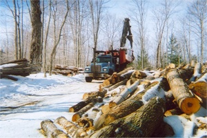 White River Junction Forestry