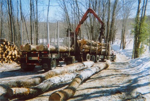 New Hampshire Buyers of Standing Timber, Vermont Buyers of Standing Timber
