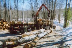Goshen Forestry