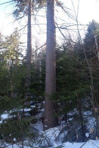 New Hampshire and Vermont Timber Appraisals
