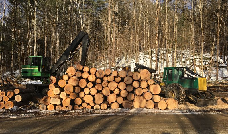 Timber Harvest On Green Mountain Turnpike In Chester VT