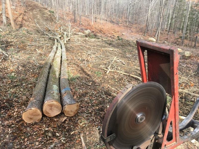 gilmanton timber harvest