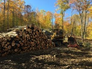 Timber Harvesting In Gilmanton