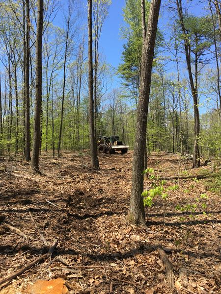 Pasture Clearing & Timber Harvest in Raymond, NH