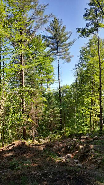 Unity NH Forestry Services