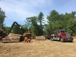 timber harvest chichester