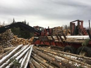 timber harvest in littleton