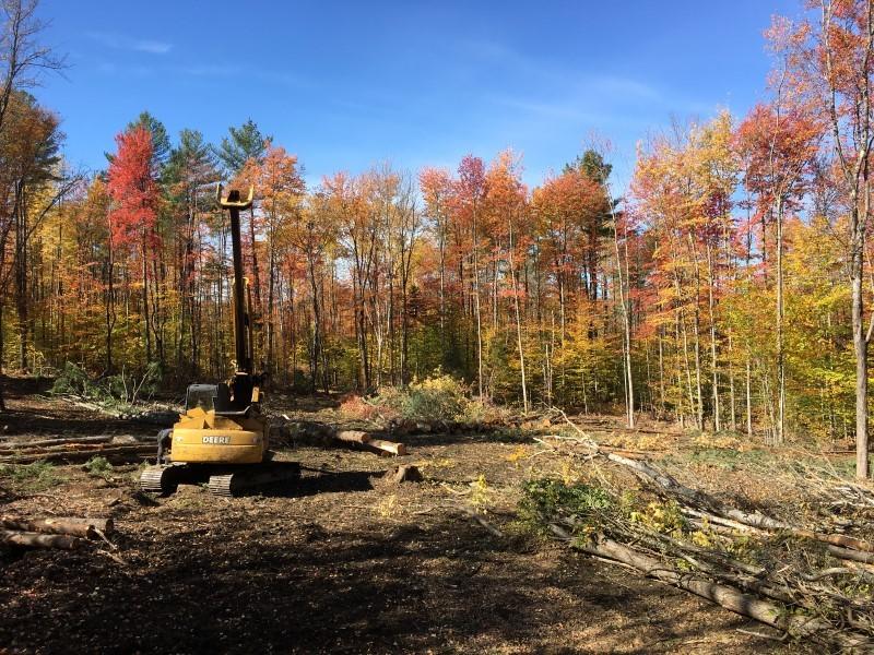 timber sale in grafton